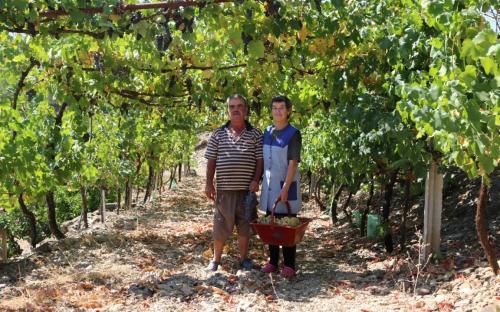 Luísa Ribas e Manuel Simão na colheita da uva para fazer vinho (Mealha, freguesia de Cachopo). © Município de Tavira 2017